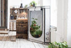 11 reasons to get an indoor greenhouse