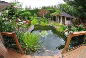 Tips to restore your backyard pond after winter