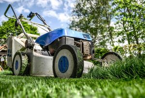 10 trending tips to maintain your lawn