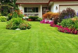 How to grow a beautiful lawn even when your thumb isn't the greenest