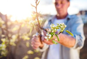 Tree and plant pruning: everything you need to know